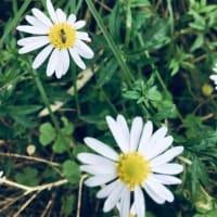 可愛い花ときれいだった夕焼け(⋈◍>◡<◍)。✧♡