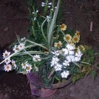 夏祭り用の寄せ植え鉢作り:2019