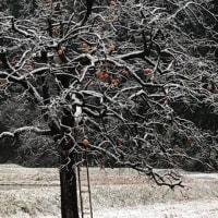 初雪です、ついに!