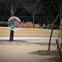 今夜もキャッチ。公園で大きなシャボン玉を見たよ。