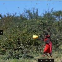 東アフリカ  拡大するバッタの「蝗害」 食糧難に拍車