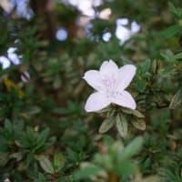 20-10.21blg:戸定邸の花