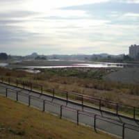 朝の多摩川サイクリングロード
