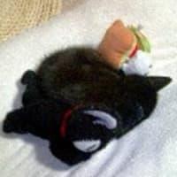 今じゃ、ギュウギュウ~&『猫バトン』続報