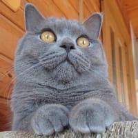 大豆写真 『世界のネコ図鑑』に掲載していただきました。