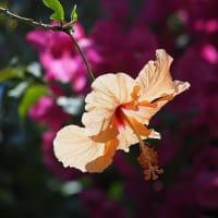 大船FC~グリーンハウスの花