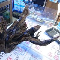 流木 約40cm