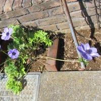 今日の庭20150330