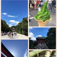夏の鎌倉散策 その2 鶴岡八幡宮