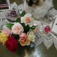 *お誕生日おめでとう!!10月1日華蓮ちゃんは11歳になりました!!!