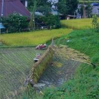 稲刈り・秋祭り