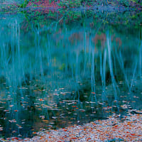 龍ヶ窪の水景