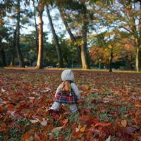 ミモロの京都紅葉情報。「京都御苑」の紅葉は、11月下旬が見ごろかな?