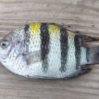 魚種が豊富と名高い相模湾♪JSフードシステム