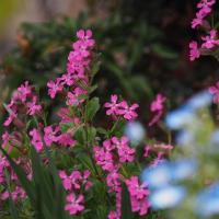 💖国分寺・庭の花達を少し💖