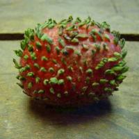 イチゴはこうして芽をだすのです^^