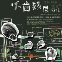 多摩動物公園干支の企画展「ちゅう げっ歯類展──むちゅうになるおもしろいなかまたち PART2」
