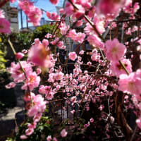 庭にも春の気配