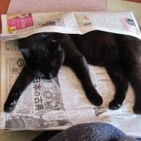 黒猫 二態 須坂温泉 古城荘