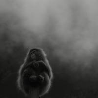 地獄谷温泉/スノーモンキー