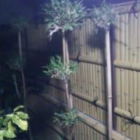 竹調フェンス・・・禁酒の日は次回に持ち越し