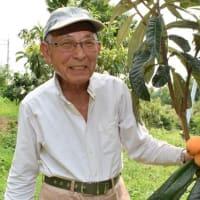 大阪府で唯一びわを生産・出荷している箕面市の止々呂美地区で、びわの収穫が最盛期を迎えています