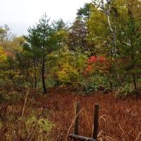 琵琶池 湖畔の紅葉