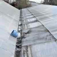 屋根の修理 朝いちの仕事です!