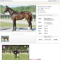 【セレクトセール2019(Select Sale)】の「ウォーキング動画(Walking video)」を公開(by馬市.com)
