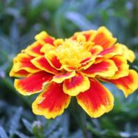 秋の花壇をにぎわす花‥④ 【ひで某】