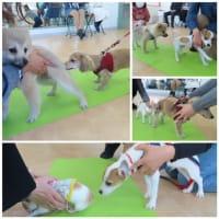 パピーパーティ-開催しました(2/21)【ALOHA塾】  犬のしつけ教室@アロハドギー