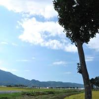 夏井のハザ木