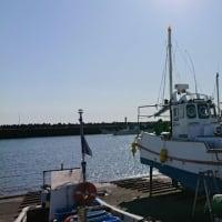 この日大漁の「しらす」|株式会社JSフードシステム