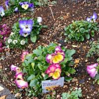 春の庭のイメージ