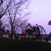 桜咲く-六本木ヒルズ