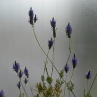 お花の蕾から少しずつ、少しずつが………♪(4)