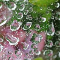 雨の日は スバイダージュエリー