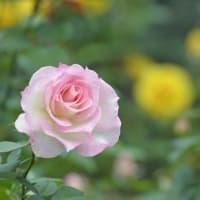 花々の咲く園