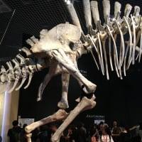 恐竜博2019 THE DINOSAUR EXPO 2019 レポート Part3.5 「異常な恐ろしい手 -デイノケイルス・ミリフィクス- の奇妙な特徴」