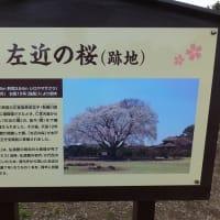 久しぶりの水戸偕楽園 2020.2.29