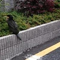 逃げない鳥|東京都大田区新築一戸建てビーテック