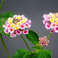 夏に、涼しい花