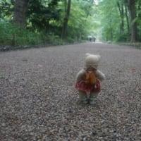 「下鴨神社」の「御蔭祭」。新しくお生まれになった神霊にご挨拶に、小雨の中、糺の森を歩きます。
