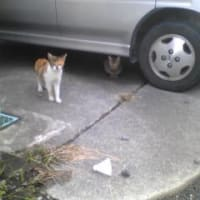 ネコとシャトル