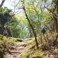 アケボノ咲く西赤石山2