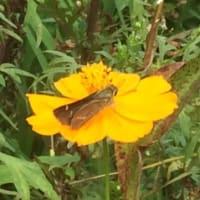 蝶(のはず)第4弾