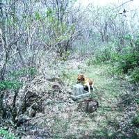 仰烏帽山のレットさんと、えびの岳、悲しい風景。
