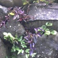 雨の日はビニール傘でお散歩だ;秋の気配の鎌倉中央公園