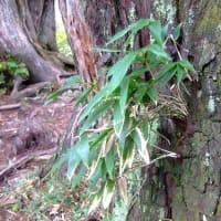 剱・立山の夕照と中山の動植物