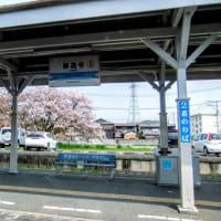 JR土讃線    善通寺駅 ホーム越しの桜